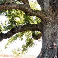 Tree Catalogue