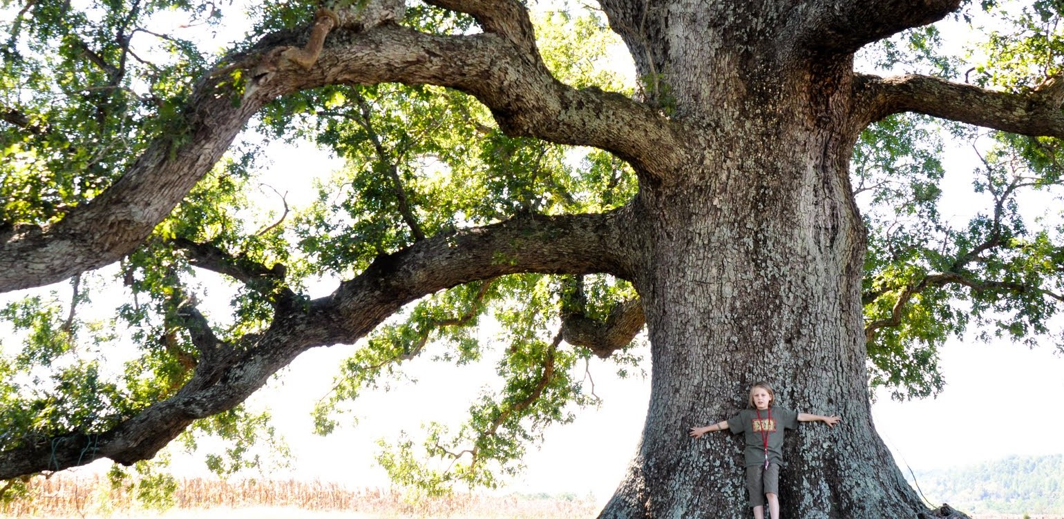 Honoring Our Living History: Live Oak Campaign