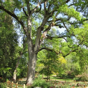 tree-73462_1280